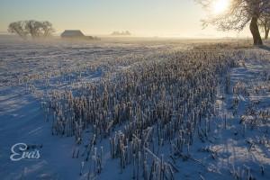 Fotograf Eva Hallkvist - naturbilder