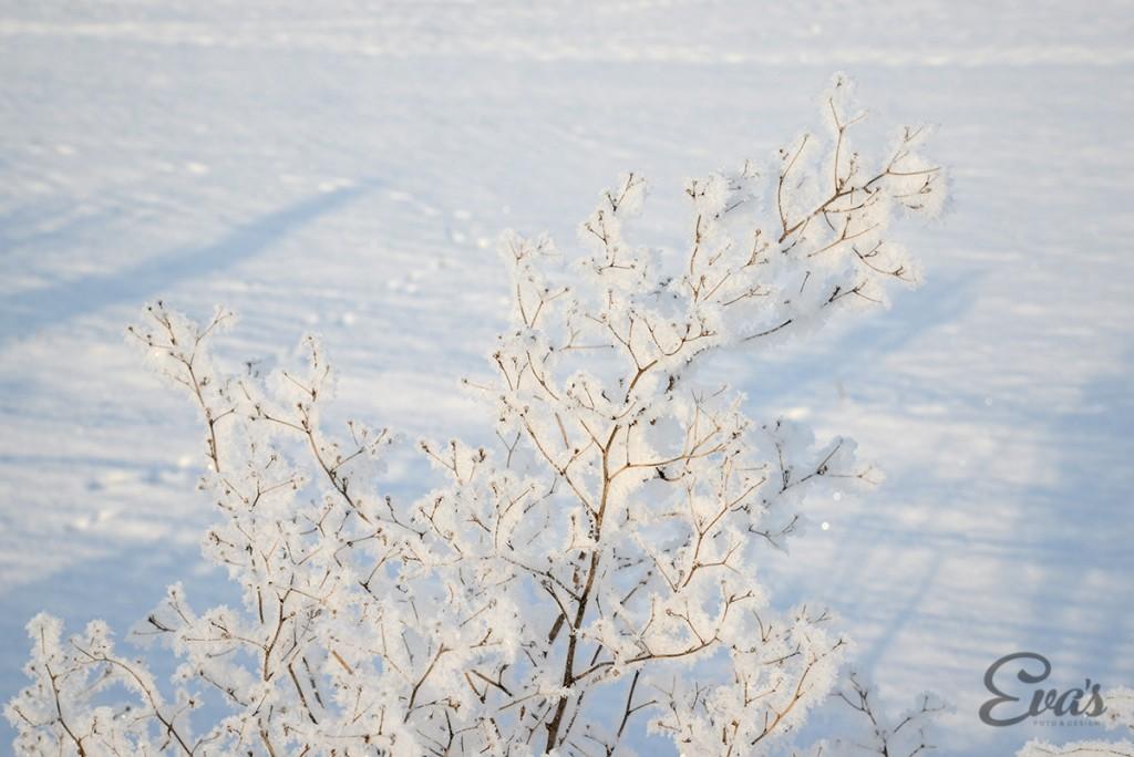 Fotograf Eva Hallkvist-naturbilder